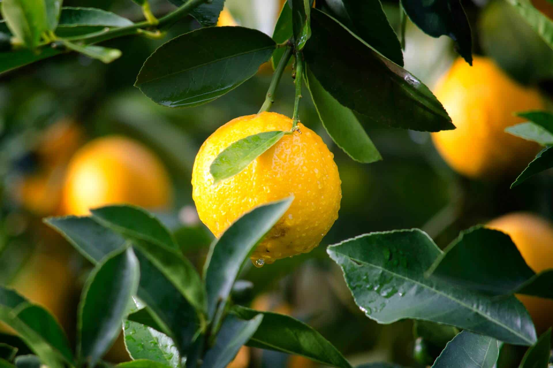 lemon home remedies for acne